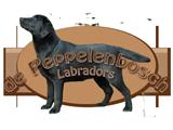 De Peppelenbosch Labrador Retrievers